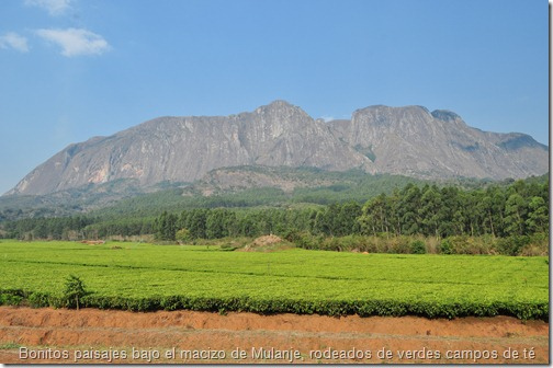 El macizo de Mulanje, rodeados de verdísimos campos de té